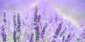 Funciona la aromaterapia
