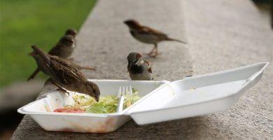 Alternativas al Plástico en la Alimentación